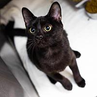 Adopt A Pet :: Delores - Birdsboro, PA