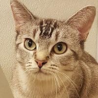 Adopt A Pet :: Moana - Grayslake, IL