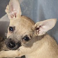 Adopt A Pet :: Hope - St Helena, CA