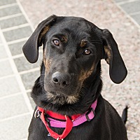 Adopt A Pet :: Julz - Richmond, VA