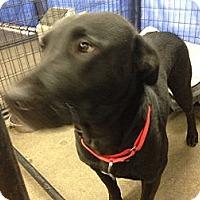 Adopt A Pet :: Daisy - Wahoo, NE