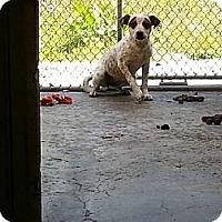 Adopt A Pet :: Loreal - Jacksboro, TN