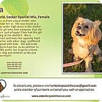 Adopt A Pet :: Luna - Ottawa, ON