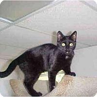 Adopt A Pet :: Breezy - Quincy, MA