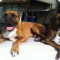 Adopt A Pet :: Pretzel - Lake Forest, CA
