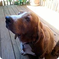Adopt A Pet :: TIARA - Pennsville, NJ