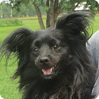 Adopt A Pet :: Max - Greenville, RI