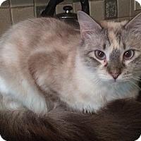 Adopt A Pet :: Bess - Warwick, NY