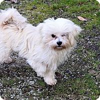Adopt A Pet :: Bessie - Hazard, KY