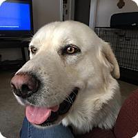 Adopt A Pet :: Stryker - Adopted! - Croydon, NH