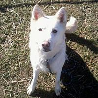 Adopt A Pet :: Snow - Harvard, IL