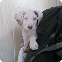 Adopt A Pet :: Gretta - ADOPTION PENDING!! - Antioch, IL