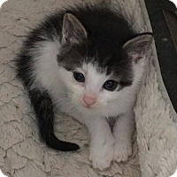 Adopt A Pet :: Clayton - Toms River, NJ
