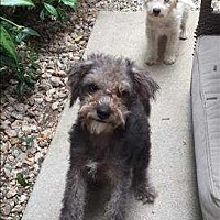 Adopt A Pet :: Smokey - Encino, CA