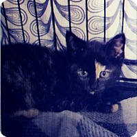 Adopt A Pet :: Riva Ridge - Trevose, PA