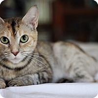Adopt A Pet :: Frizzle - Homewood, AL