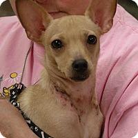 Adopt A Pet :: Peanut-ADOPTED - Somerset, KY