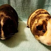 Adopt A Pet :: Allegro - Highland, IN