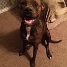 Adopt A Pet :: Lucy (COURTESY POST)