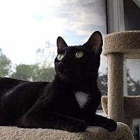 Adopt A Pet :: Daffodil - St. Charles, MO
