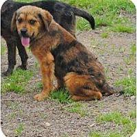 Adopt A Pet :: Leo - New Boston, NH