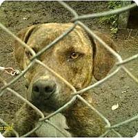 Adopt A Pet :: MaKenzie - Emory, TX