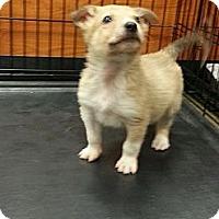 Adopt A Pet :: Rudolph - Ogden, UT