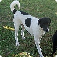 Adopt A Pet :: Lee Ann - Byrdstown, TN