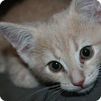 Adopt A Pet :: Jones - Canoga Park, CA