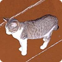 Adopt A Pet :: Patches - Hampton, CT