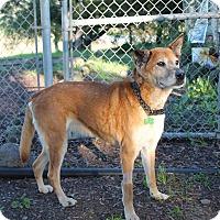 Adopt A Pet :: Willow - Petaluma, CA