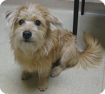 Terrier (Unknown Type, Medium) Mix Dog for adoption in Gary, Indiana - Pinky