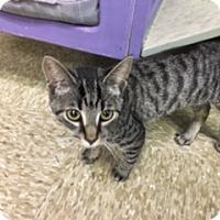 Adopt A Pet :: Anni - Medina, OH
