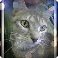 Adopt A Pet :: Salada - Trevose, PA