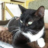 Adopt A Pet :: Teresa - Conway, SC