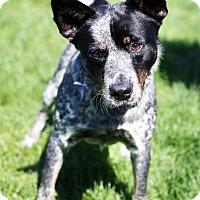 Adopt A Pet :: Max - Appleton, WI