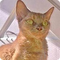 Adopt A Pet :: Jophiel (Jofee) - Davis, CA