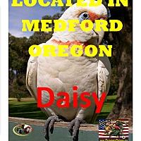 Adopt A Pet :: DAISY LOCATED MEDFORD OREGON - Vancouver, WA