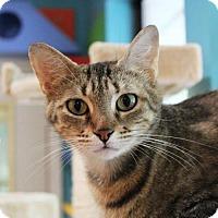 Adopt A Pet :: Pandora - Tallahassee, FL