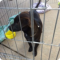 Adopt A Pet :: Milly - Hohenwald, TN