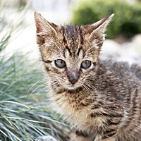 Adopt A Pet :: Dina - Manhattan, NY