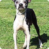 Adopt A Pet :: Digger - Waldorf, MD