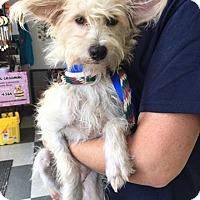 Adopt A Pet :: Shaggy - Island Heights, NJ