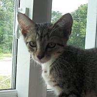 Adopt A Pet :: Gyles - Lacon, IL