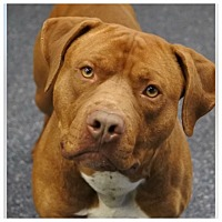 Adopt A Pet :: Raider - Anchorage, AK