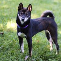 Adopt A Pet :: Lily - Elkhorn, WI