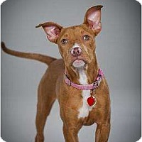 Adopt A Pet :: Faye - Rochester, NY