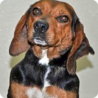 Adopt A Pet :: Jazz - Port Washington, NY
