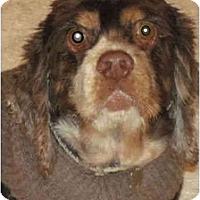 Adopt A Pet :: Mattie - Sugarland, TX