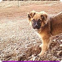 Adopt A Pet :: Kota - COURTESY POSTING - Pulaski, TN